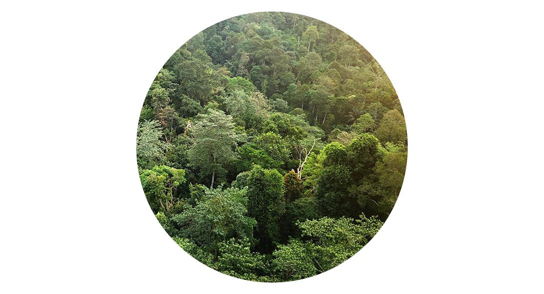 Mayan – det naturlige valg